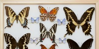 MAIN Athens Butterflies from Tallassee Forest By Chuck Murphy Photo
