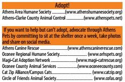 Additional Athens GA Pet Care Adoption Resources
