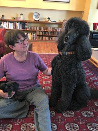English Standard Poodle and Baby Boomer Owner