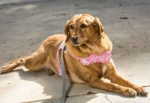 Baby Boomers and their pets - Aging Population and Issues