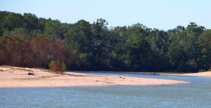The Altamaha River along the Woodpecker Trail.
