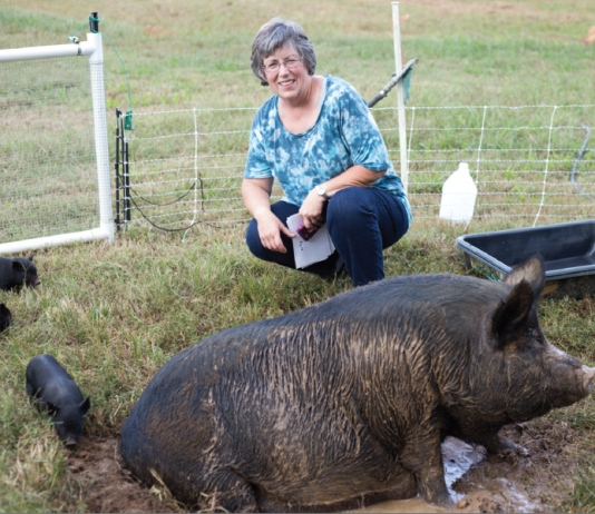 Cathy Payne with mama hog and piglets.